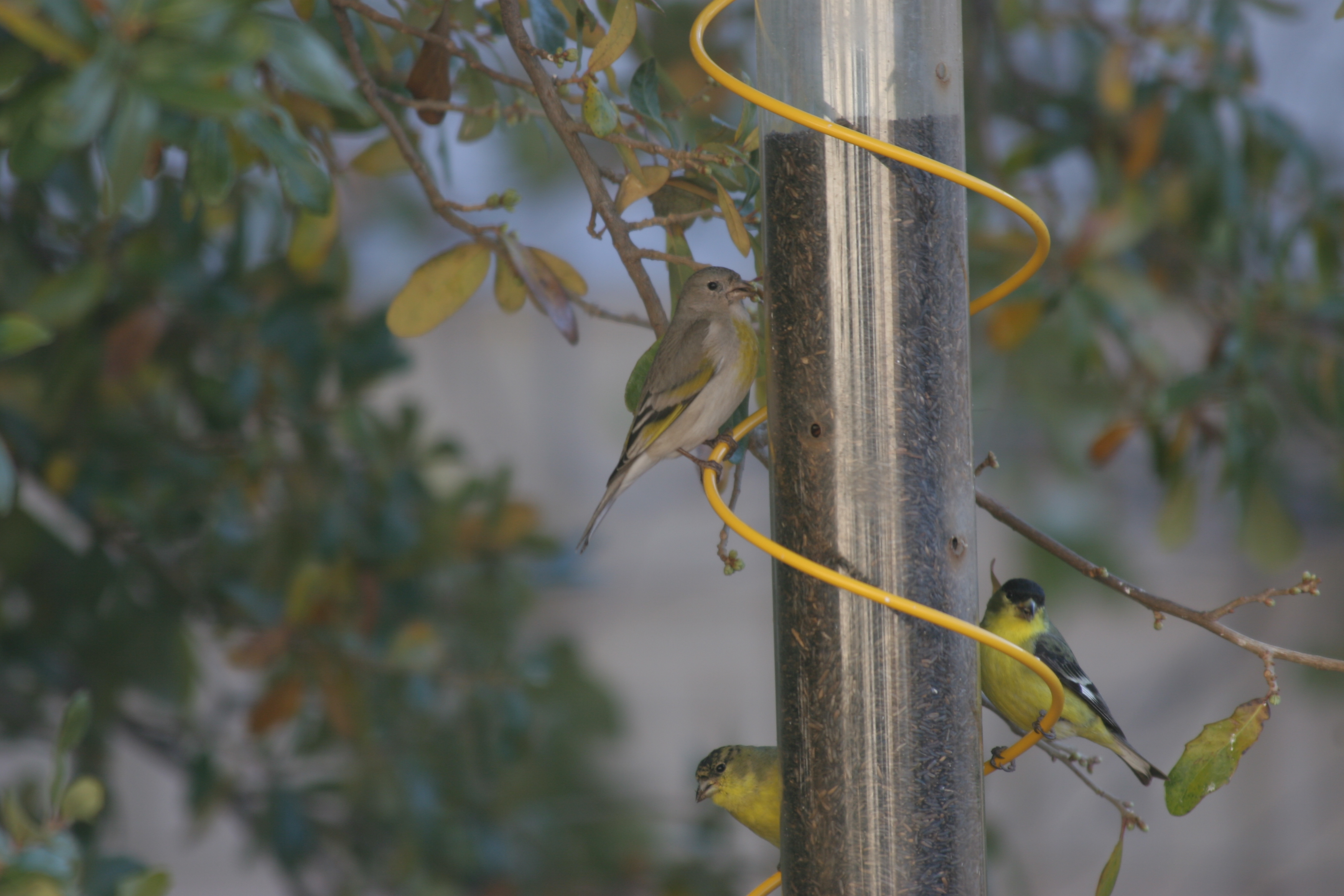 feeders product wbird cfm feeder at recycled magnet wild gs drs and prod thistle foster mesh bird display nyjer smith