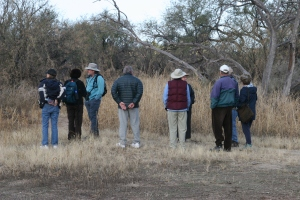 A Free Guided Bird Walk in Catalina State Park (photo Bob Bowers)