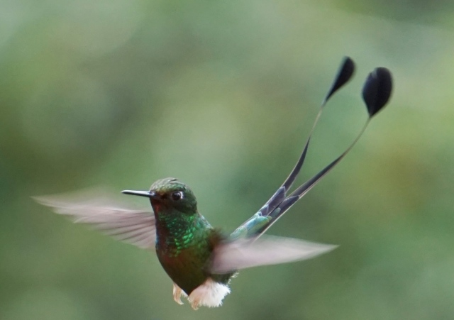 booted-racquet-tail