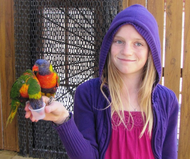 a-lorikeet-treat-for-grand-kids