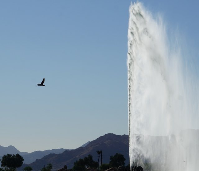 A Cormorant and the Fountain.JPG